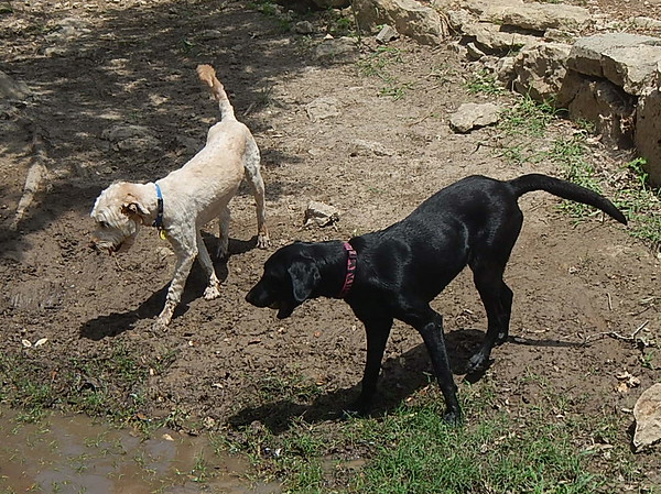 Biscuit S and Schatzi L watching for any fish in the creek