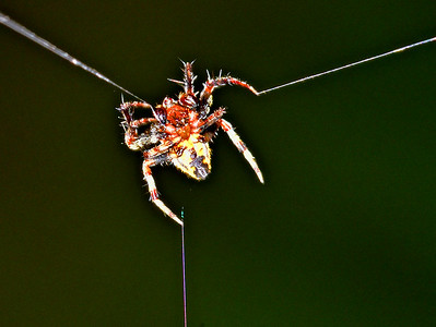 """""""How Spider Webs Are Made."""""""