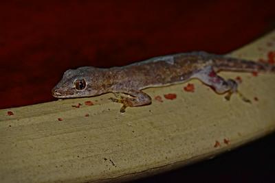 Gecko after drinking from the bird bath - evening