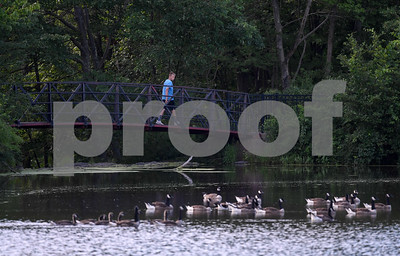 062817  Wesley Bunnell | Staff  A walker looks down at the geese as he passes over a bridge at Mill Pond Park on Wednesday afternoon