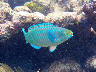 Bonus Underwater Photos