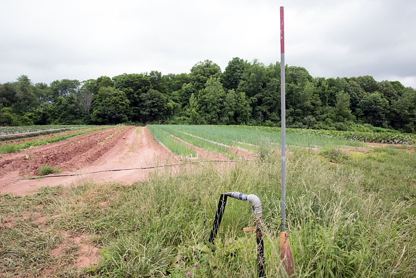 06/14/18 Wesley Bunnell | Staff Water pipes lead from an underground well to soaker hoses to provide irrigation for crops at Cold Spring Brook Farm in Berlin.