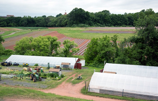 06/14/18 Wesley Bunnell | Staff Several greenhouses at Cold Spring Brook Farm in Berlin are shown with crops growing in the background. The top of the Eversource building can be seen behind the treelike in the back.