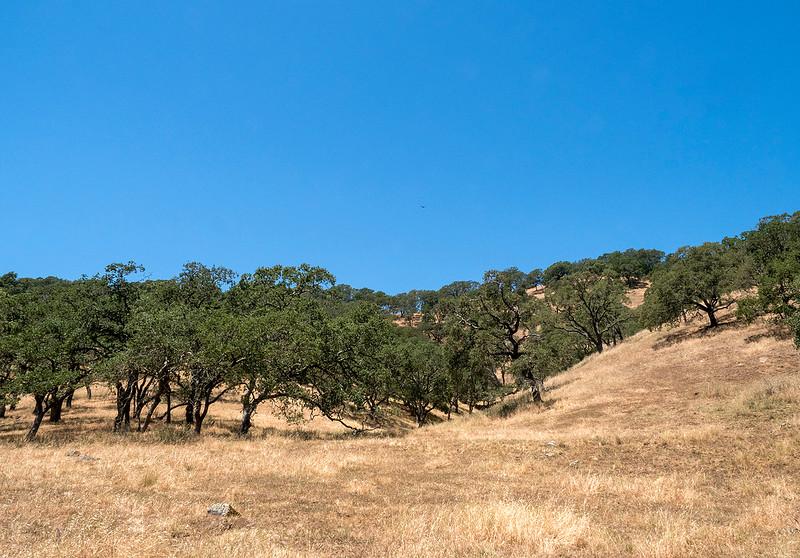 rockville hills