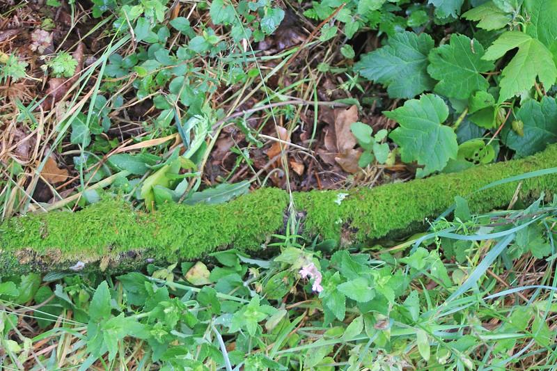 Moss-covered log, roadside between Ffald-y-Brenin and Jabes Vestry