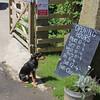 Bluestone Brewing Company, Cilgwyn, North Pembrokeshire