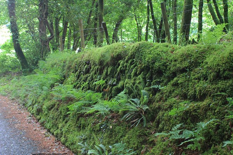 Pontfaen, road from Jabes Vestry to Bedd Morris road