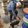 Harvey and the resident pooch at Bluestone Brewing Company, Cilgwyn, North Pembrokeshire