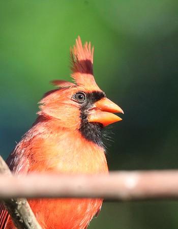 June Birds Yard FIRST