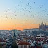 Sunset Flocks Over Prague