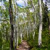 Rob's Trail Aspens