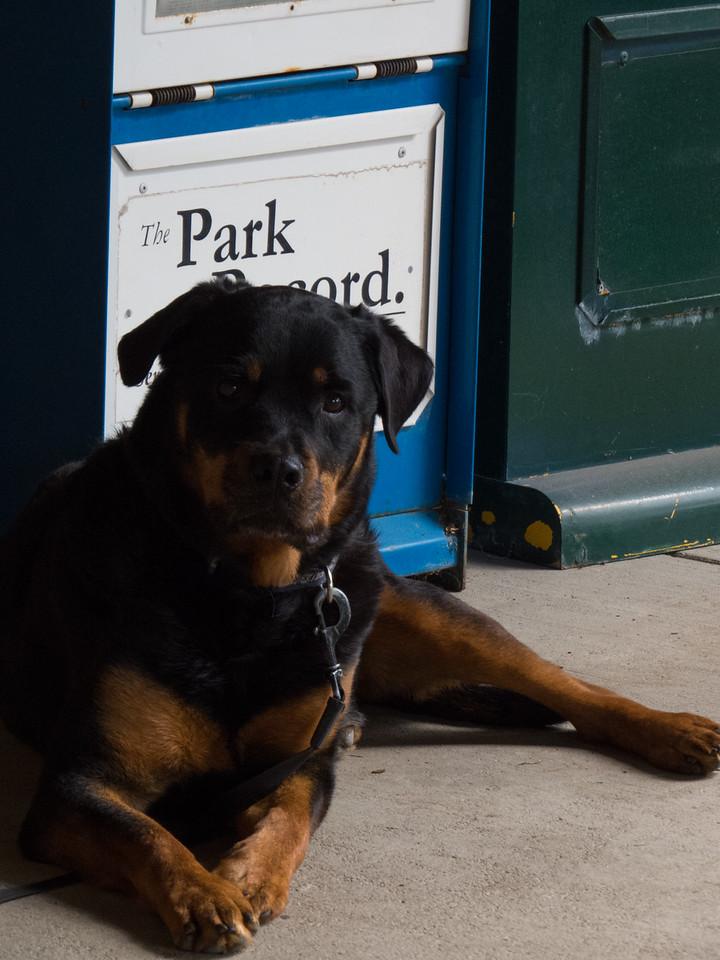 Park Record Rottweiler