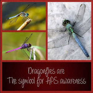 Dragonflies are the symbol for APS awareness. Do you have dragonflies in your garden?? Share with us!! #aps #apsawareness #goburgundy #dragonfly #antiphospholipid #antiphospholipidsyndrome