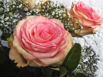 Roses for Doe. 2.