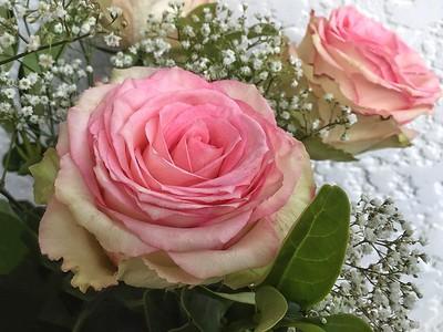 Roses for Doe. 1.
