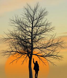 """Tree, Sun , Doe. 2."""