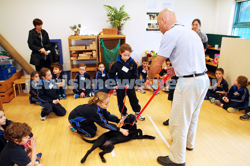 25-6-14. Dogs For Life program at Bialik College. Dog trainer Yariv Ben-Yosef and Tassie working with grade 1 students. Photo: Peter Haskin