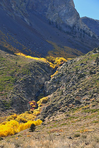 A glacier fed stream feeds this aspen trees all summer.