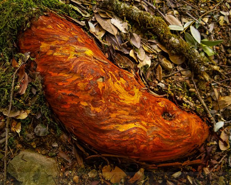 Manzanita Root