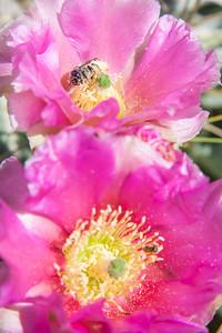 Pollen buffet