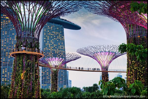 SINGAPOUR VILLE JARDIN. LE JARDIN GARDEN BY THE BAY ABRITE PLUS DE 100 000 ESPECES DE PLANTES