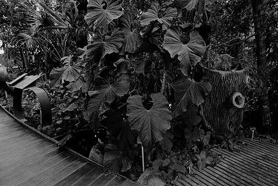 Jardin des plantes - Paris