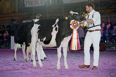 Junior Holstein Champions