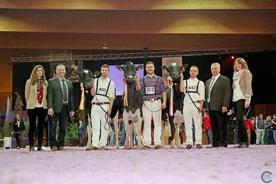 Senior Holstein Champions