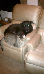 This is one of my favorite photo's of El Gato. He didn't care that there was another chair right there available to have all his own. Nope, he wanted his chair and even though he didn't care for dogs, he'd rather share that chair with Bear.