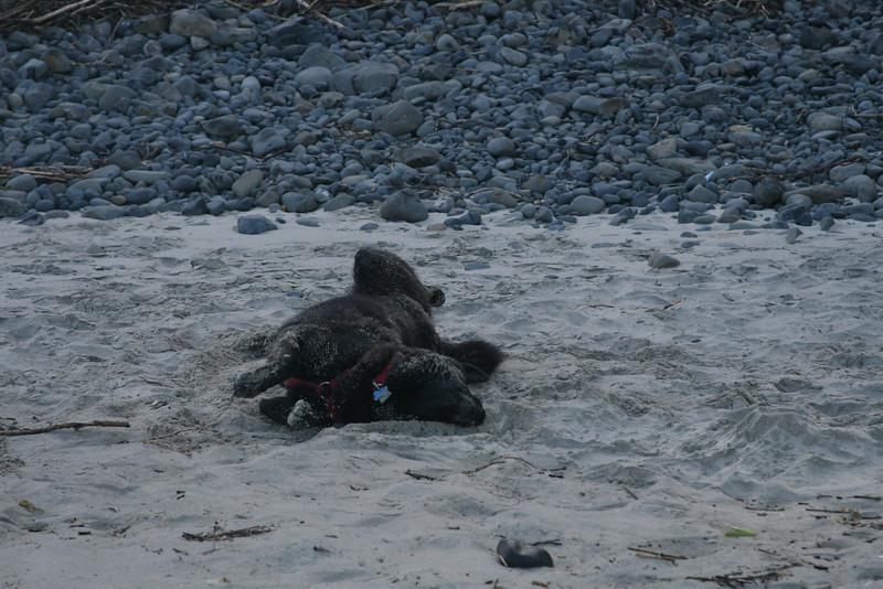Dirt, snow or sand, Bear has to take his bath.