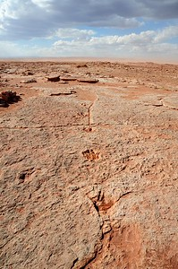 Dinosaur tracks in Arizona, USA