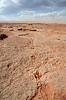 Dinosaur tracks in Arizona, USA