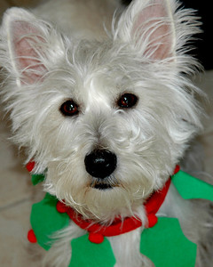 "Wendy Wagner -  ""Honest Santa – I've been Good"" - 3rd Place Advanced Division"