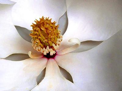 "Irene Dowdy - ""Magnolia Blossom"" - 2nd Place Advanced Division"