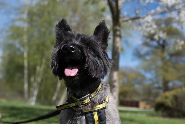Dogs Trust 2017 photoshoots