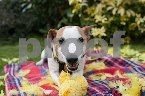 Dogs Trust March 2016