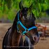 20160924_Horses_9635_1