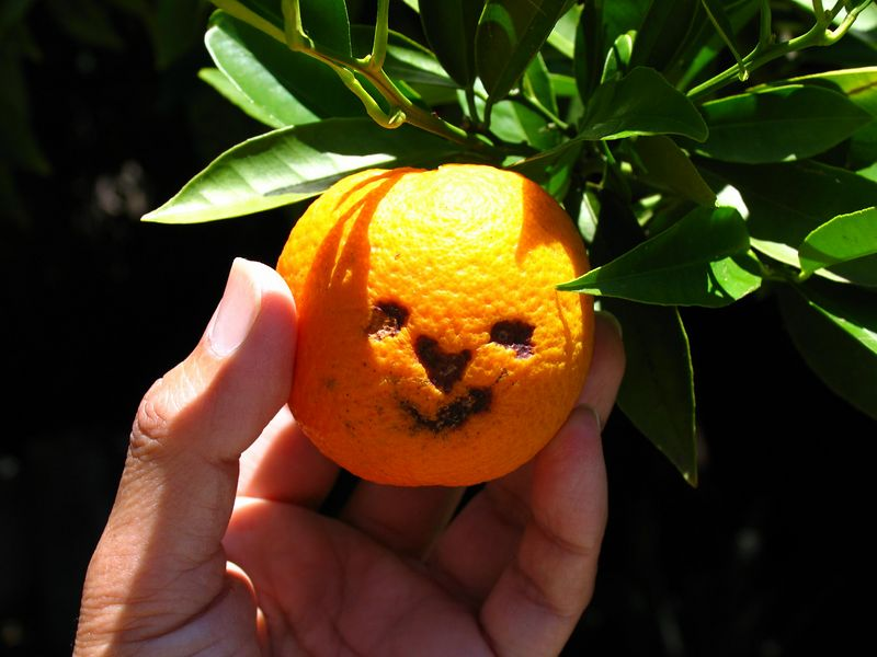 An orange in the backyard with a face.