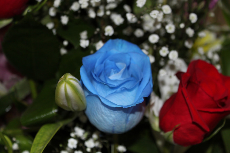 Roses are red and Roses are Blue.