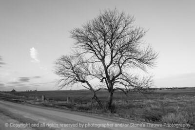 015-tree-ankeny-21mar21-12x08-008-400-bw-0208