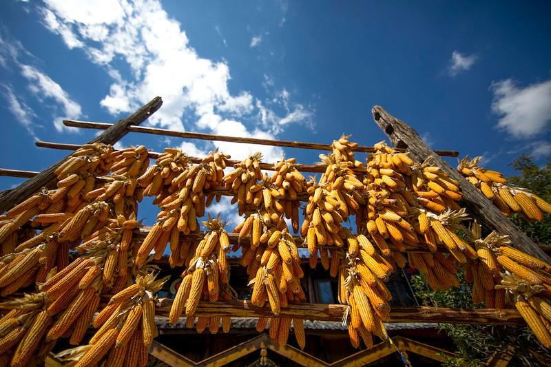 Lijiang, 2013 October