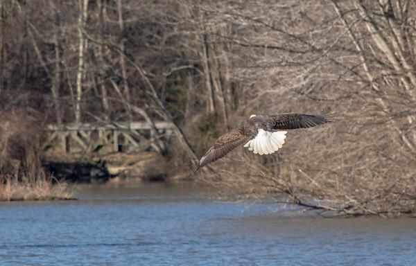 Bridge and an eagle