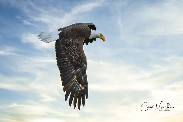 Cross Creek Eagle