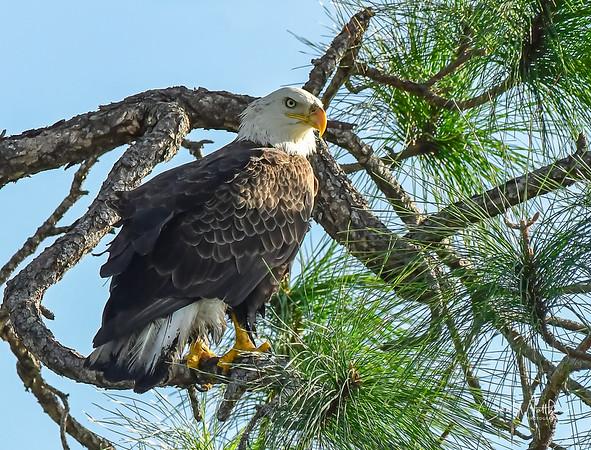 Eagle visit