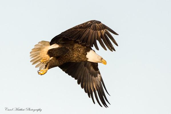 Femaile in flight