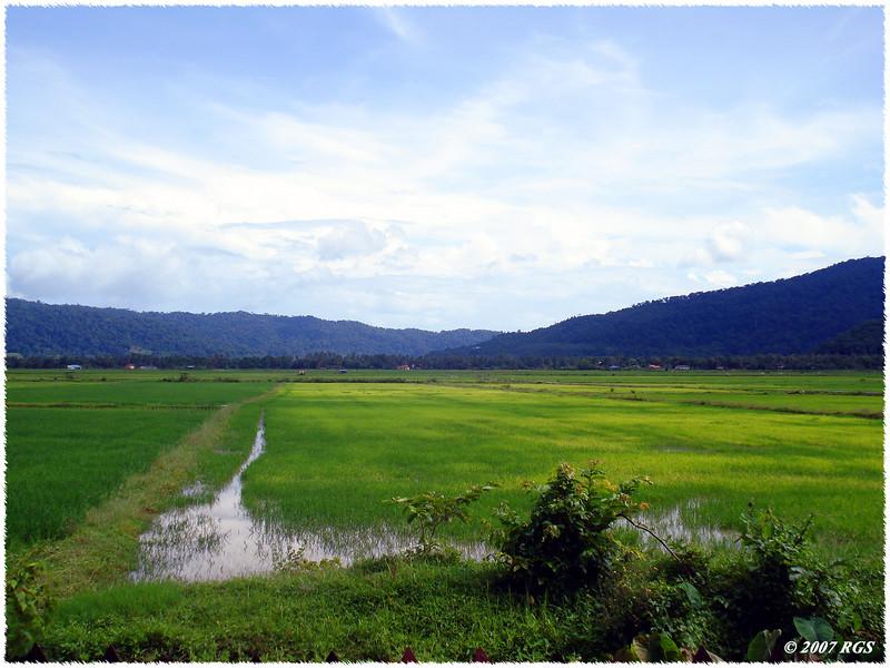 Padi Field - Langkawi