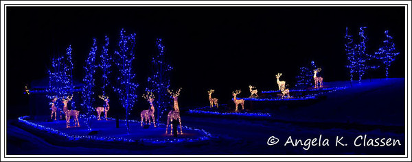 Blue lights and reindeer, Christmas 2013