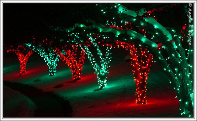 Alternating red and green trees on a street in the Crestview subdivision, Grand Junction, Colorado, Christmas 2013