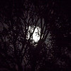 Shooting the mostly full moon through some trees.