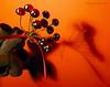 ladybugslandscape